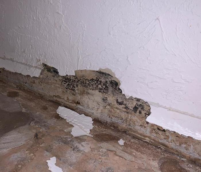 Mold growth on wall.